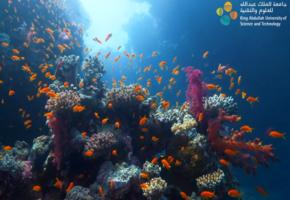 Kaust - Red Sea Monitoring